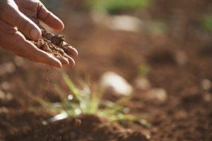 soil is living